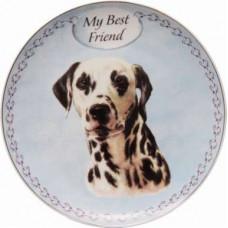 Dalmatian plate (my best friend)